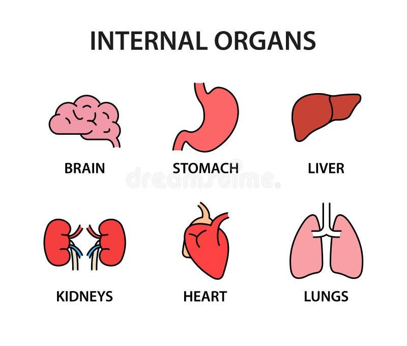 Raccolta umana dell'icona degli organi interni Forti organi sani Cuore, fegato, cervello, stomaco, polmoni, reni Illustrazione di illustrazione vettoriale