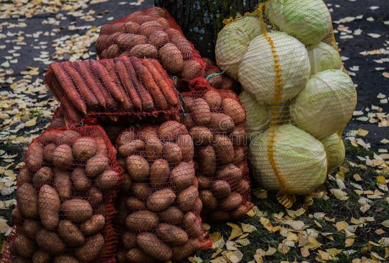 Raccolti in sacchi di carote, patate e teste di cavolo cappuccio immagini stock libere da diritti