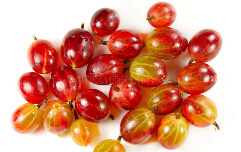 Download Raccolto dell'uva spina fotografia stock. Immagine di sano - 56881528