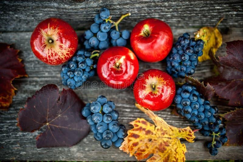 Raccolto di autunno alla vigna ed all'azienda agricola con l'uva matura ed i frutti freschi ed organici rossi delle mele, fotografia stock libera da diritti