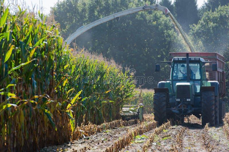 Raccolto di cereale, raccoglitrice di foraggio del cereale nell'azione, camion del raccolto con il trattore fotografie stock