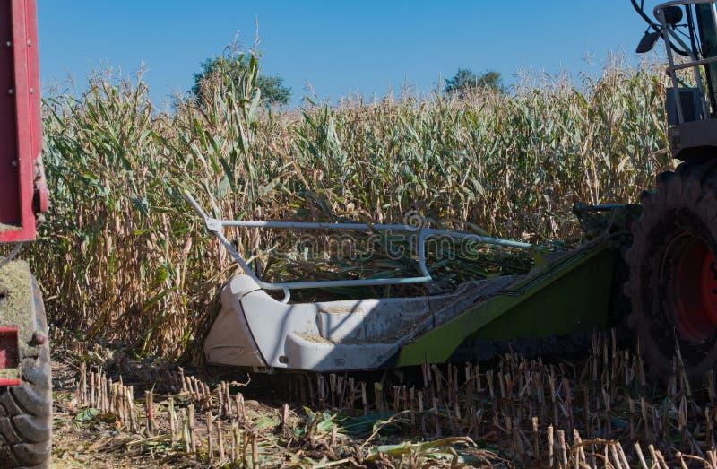 Raccolto di cereale, raccoglitrice di foraggio del cereale nell'azione, camion del raccolto con il trattore immagine stock libera da diritti