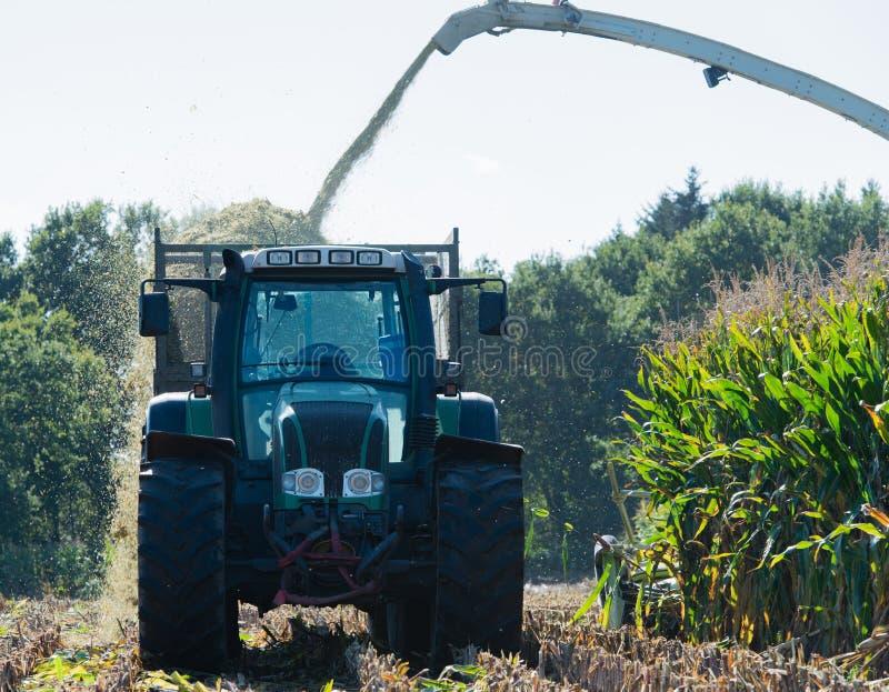 Raccolto di cereale, raccoglitrice di foraggio del cereale nell'azione, camion del raccolto con il trattore immagine stock