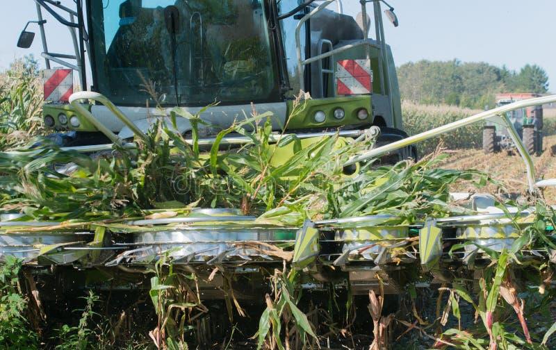 Raccolto di cereale, raccoglitrice di foraggio del cereale nell'azione, camion del raccolto con il trattore fotografie stock libere da diritti
