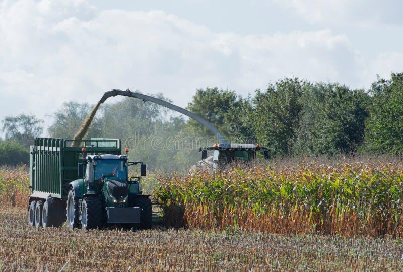Raccolto di cereale, raccoglitrice di foraggio del cereale nell'azione, camion del raccolto con il trattore immagini stock libere da diritti