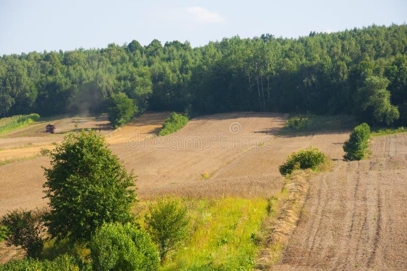 Raccolto di grano sul campo dalla foresta immagine stock libera da diritti