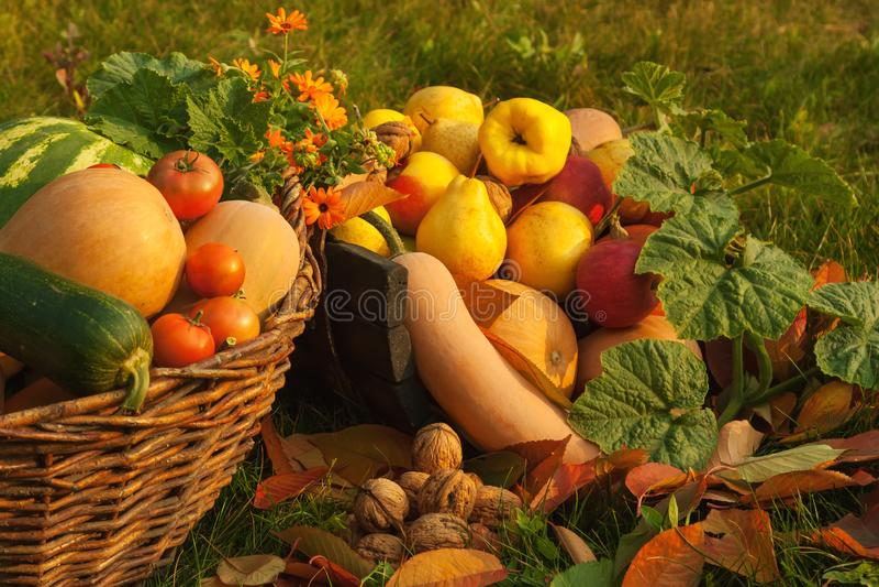 Raccolto nel giardino di autunno fotografia stock libera da diritti