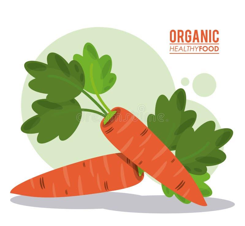 Raccolto sano organico della carota dell'alimento illustrazione vettoriale