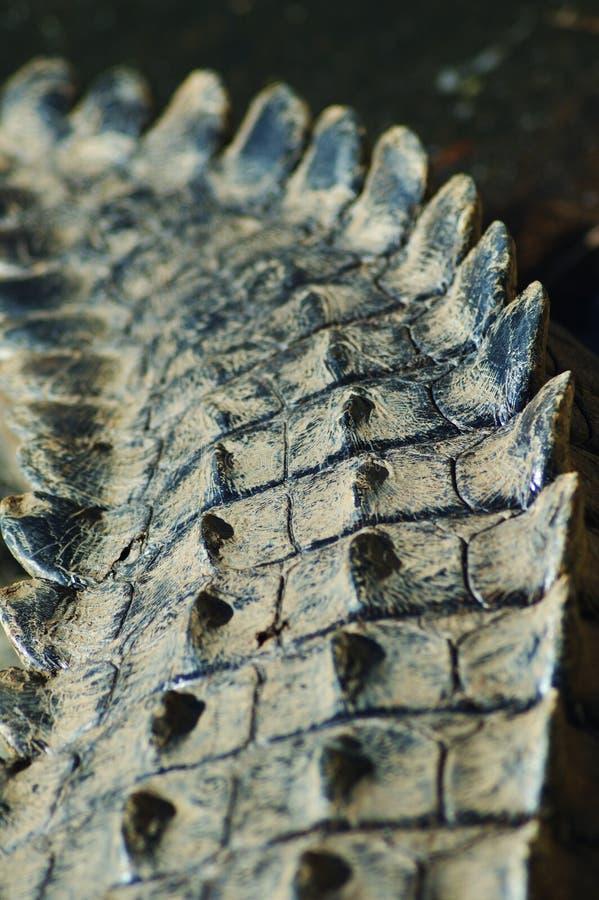 Racconto #2 del coccodrillo fotografia stock libera da diritti