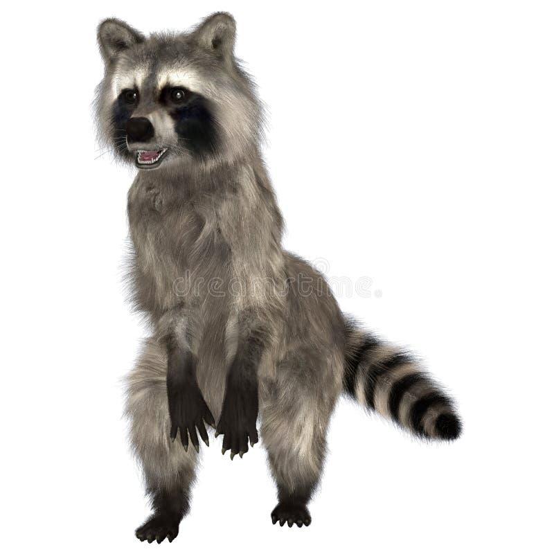 raccoon ilustração stock