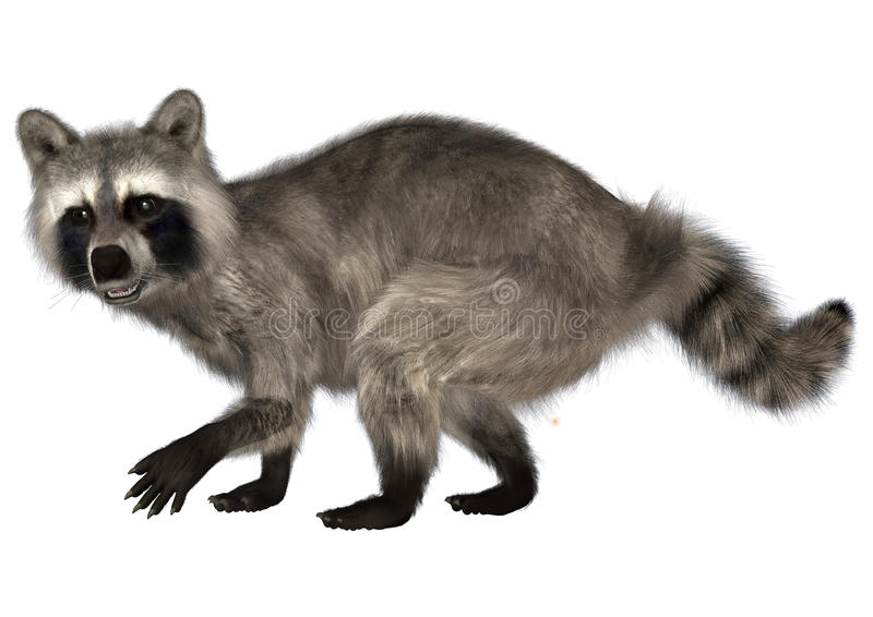 raccoon illustration de vecteur