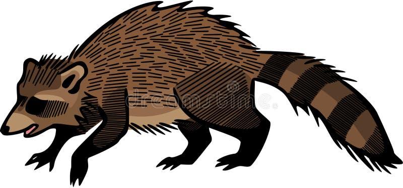 raccoon иллюстрация штока
