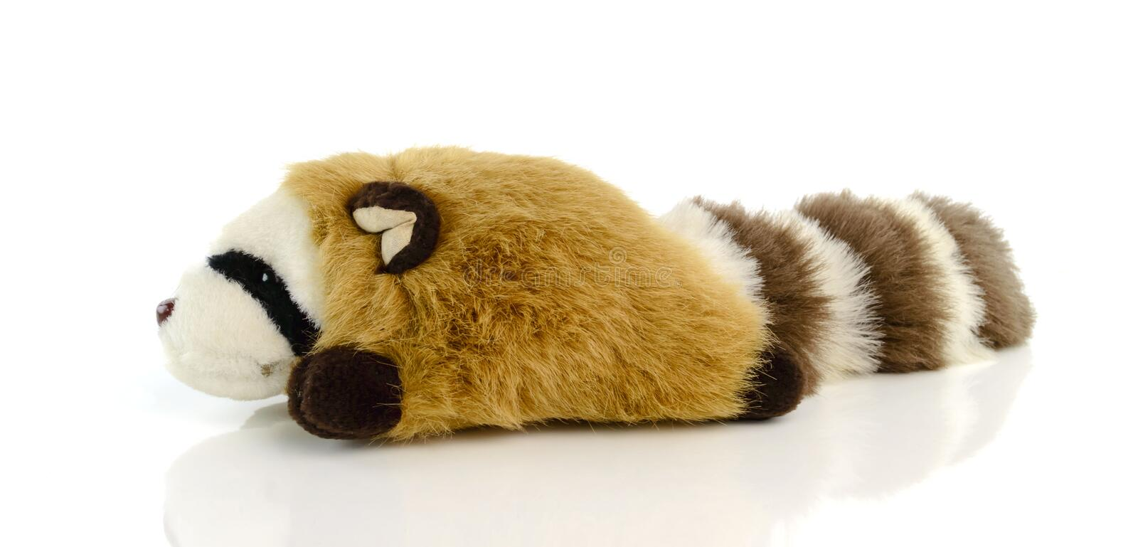 Raccoon doll isolated on white background. Raccoon doll isolate on white background stock photos