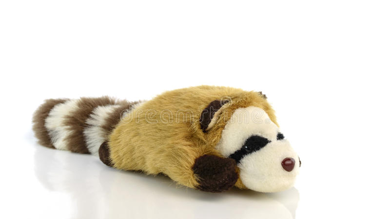 Raccoon doll isolated on white background. Raccoon doll isolate on white background royalty free stock photos