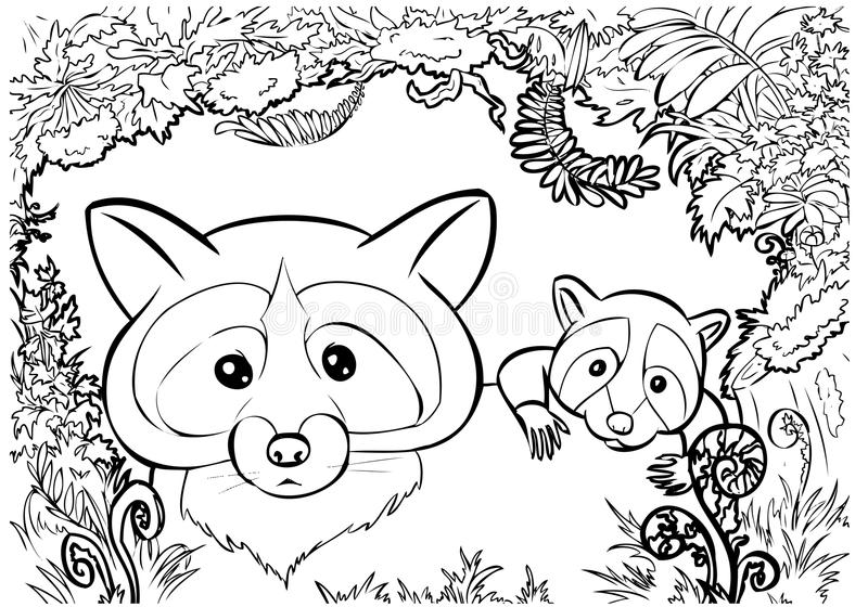 Raccoon family coloring stock image
