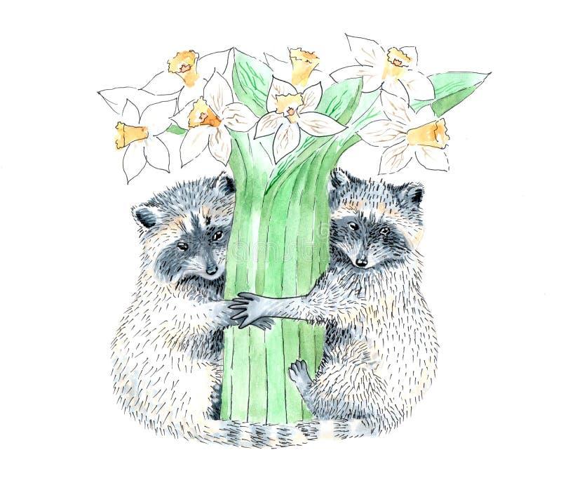 Raccoon. Illustration of two amorous raccoons stock illustration