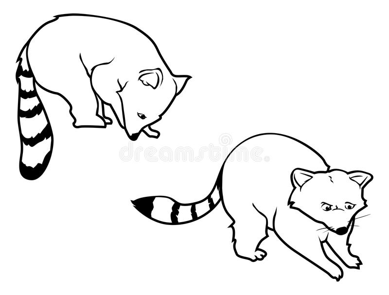 Download Raccoon outlines stock vector. Image of critter, book - 17516379