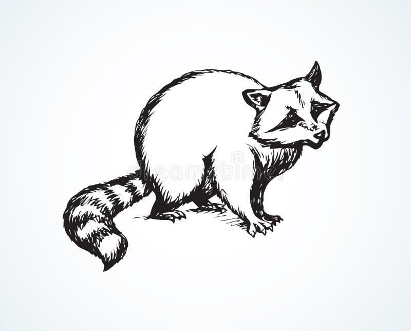 raccoon również zwrócić corel ilustracji wektora ilustracji
