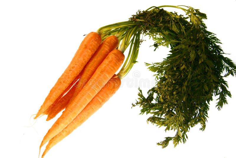 Download Raccord en caoutchouc image stock. Image du nutrition - 8660639