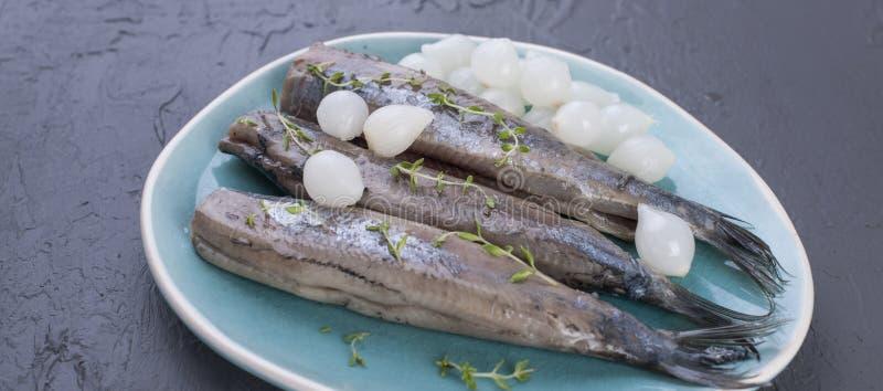 Raccordi di aringa con le cipolle su un piatto blu, una squisitezza olandese tradizionale Pasto delizioso dei frutti di mare Copi immagini stock libere da diritti
