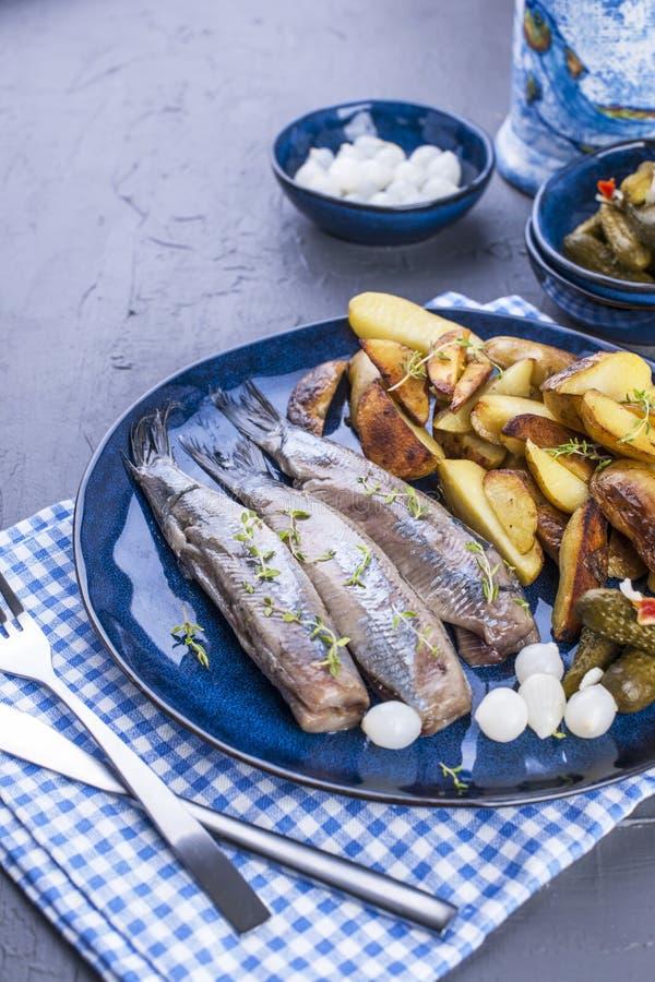 Raccordi di aringa su un piatto, al forno nelle patate e nei sottaceti del forno Alimento tradizionale delizioso dell'Olanda Squi fotografia stock
