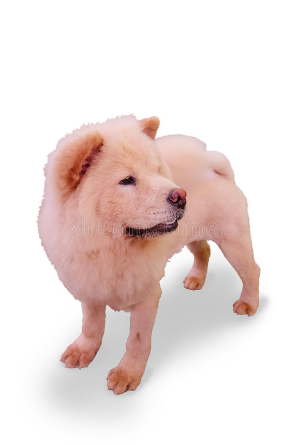 race à l'air distinctif de chien photos libres de droits