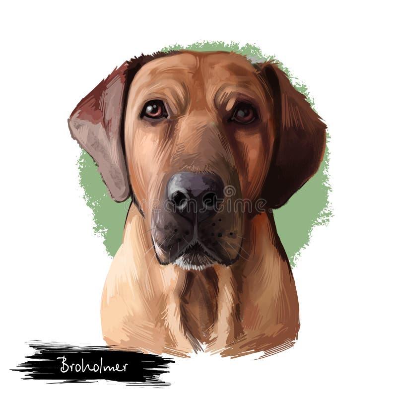 Race de chien de Broholmer d'isolement sur l'illustration numérique d'art de fond blanc Grande race de Molosser de mastiff danois illustration stock
