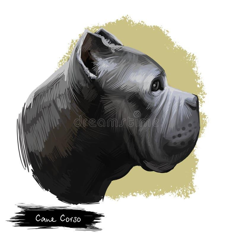 Race de chien de Cane Corso d'isolement sur l'illustration numérique blanche d'art Grande race de mastiff italien de compagnon de illustration de vecteur