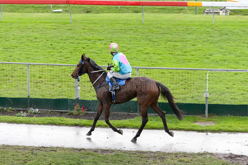 Download Race horse stock image. Image of australia, equine, horse - 18605623