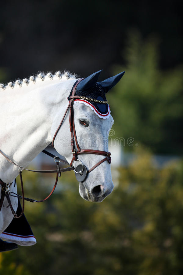 Download Race horse stock image. Image of white, riding, area - 22667491