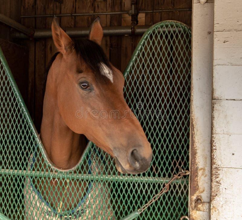 A Race Horse at Churchill Downs. A race horse in a stable at Churchill Downs in Louisville, Kentucky stock photos