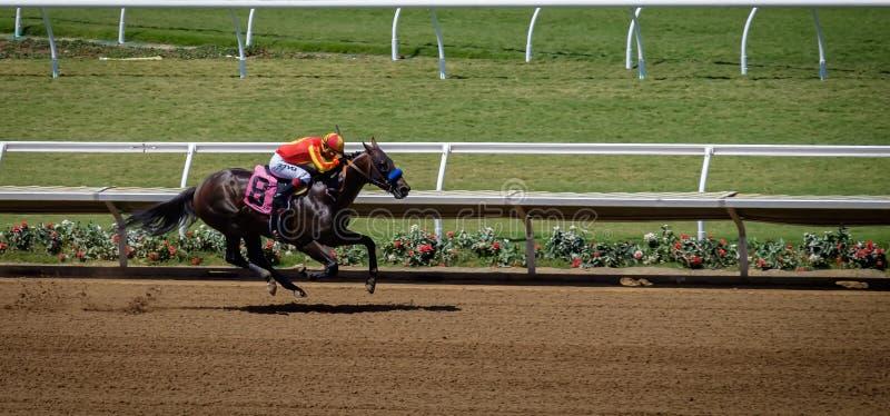 Race Horse, Del Mar, California royalty free stock photos
