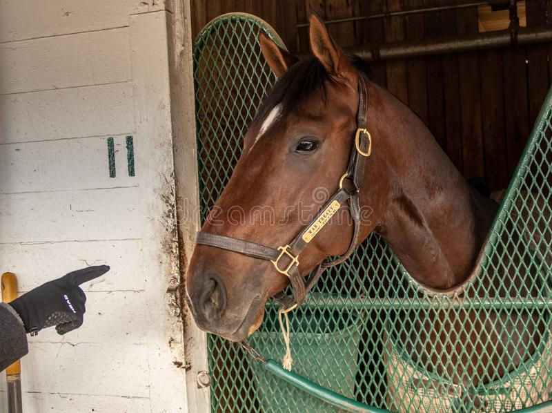 A Race Horse at Churchill Downs. A race horse in a stable at Churchill Downs in Louisville, Kentucky royalty free stock images