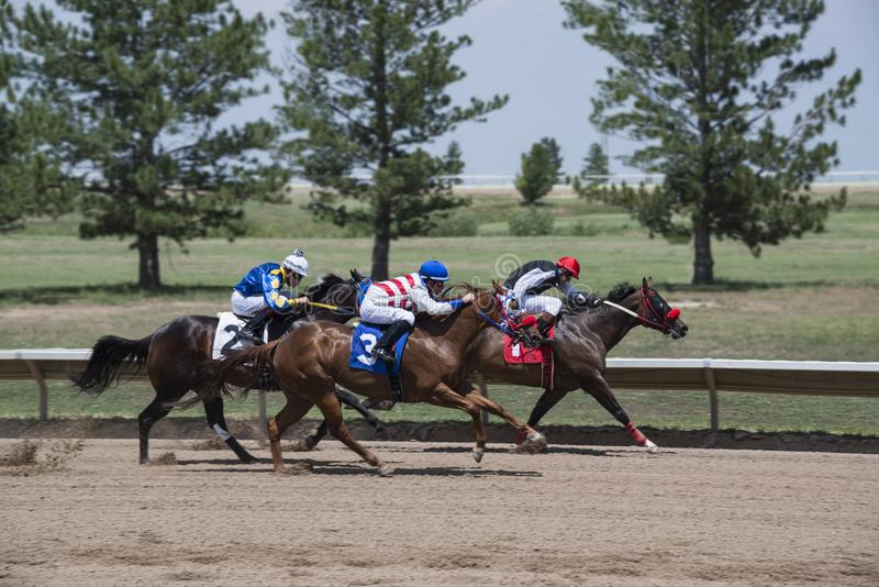 Race horses running in tight group as jockeys ride them along the rail at Araphaoe Park & Mile High Race Track, Aurora, Colorado,. USA, August 4, 2018 royalty free stock photo
