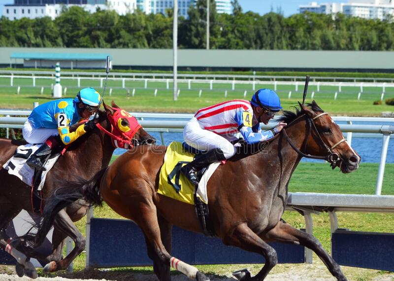 Race Horses Striving to Finish the Race royalty free stock image