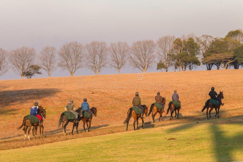 Race Horses Training Dawn Editorial Stock Photo