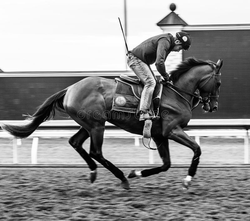 Racecourse - Keeneland. Keeneland Racetrack, early one spring morning, in Kentucky. Black and white tone and muscle of a gorgeous horse royalty free stock image