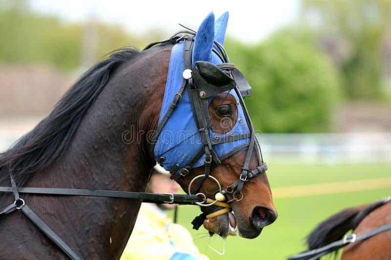 Racehorce imagenes de archivo