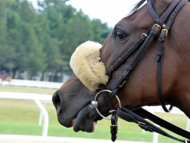 racer royalty-vrije stock foto's
