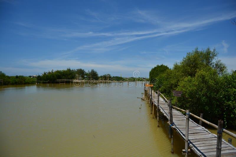 Rachando as nuvens na floresta dos manguezais imagens de stock