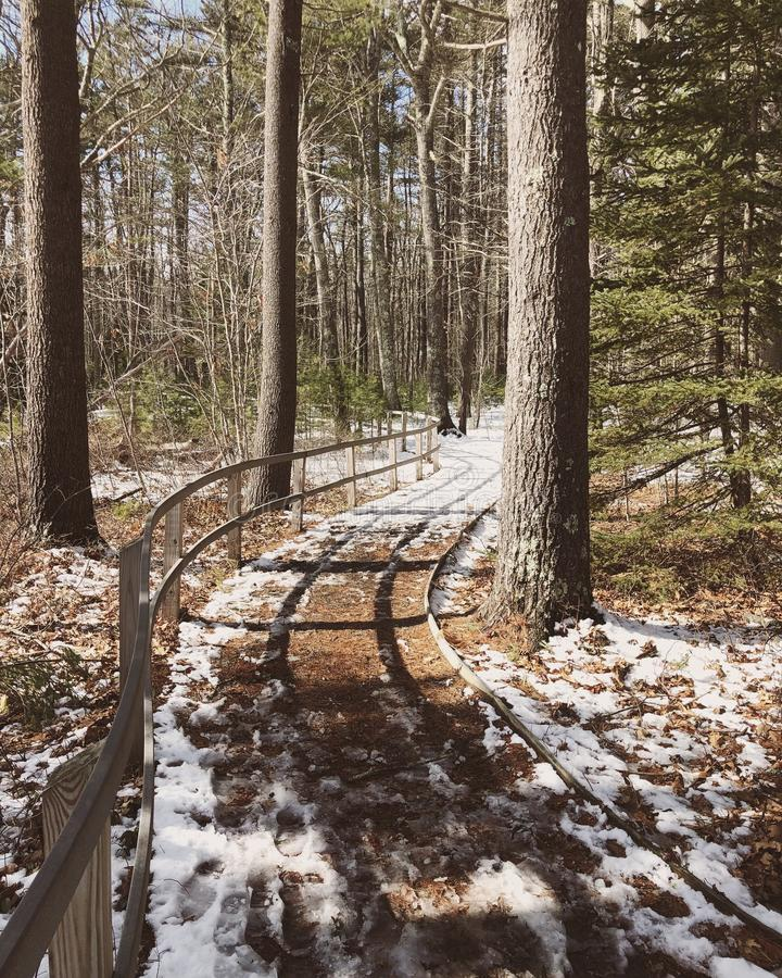 The Rachel Carson National Wildlife board path. The Rachel Carson National Wildlife Refuge wooden hiking board path in winter Cumberland County,York County stock photography