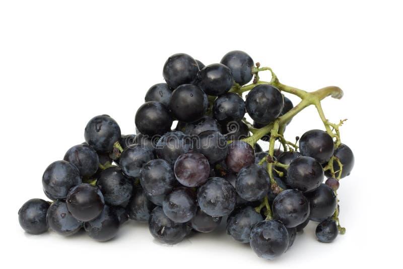 Racimo azul de la uva imagen de archivo libre de regalías
