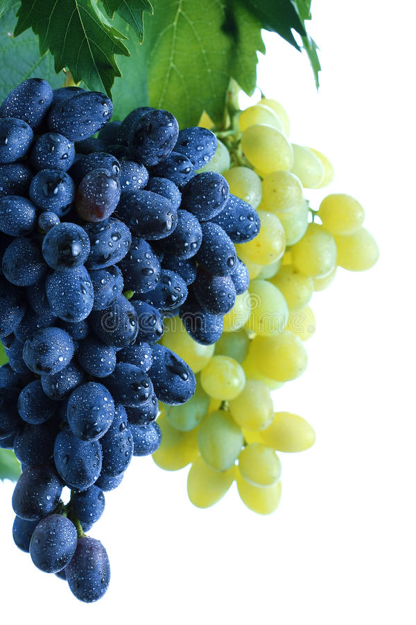 Racimo azul y verde de la uva con las hojas en vid fotografía de archivo libre de regalías