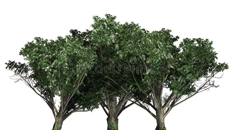 Racimo común del arbusto del espino con las flores stock de ilustración