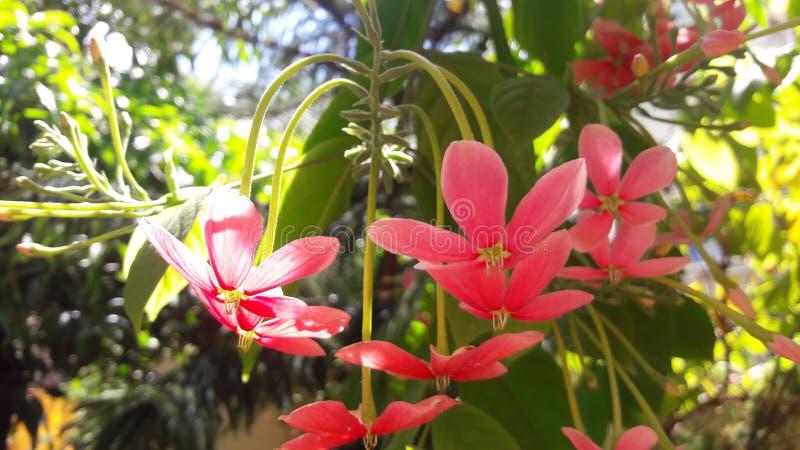 Racimo de flores rojas y blancas fotografía de archivo