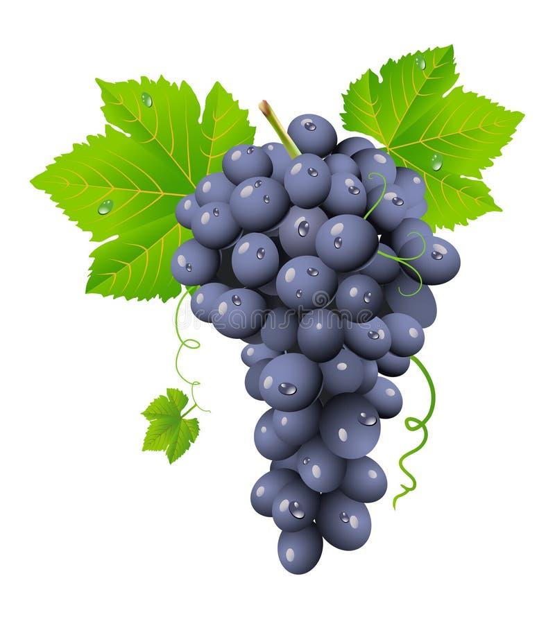Racimo de la uva stock de ilustración