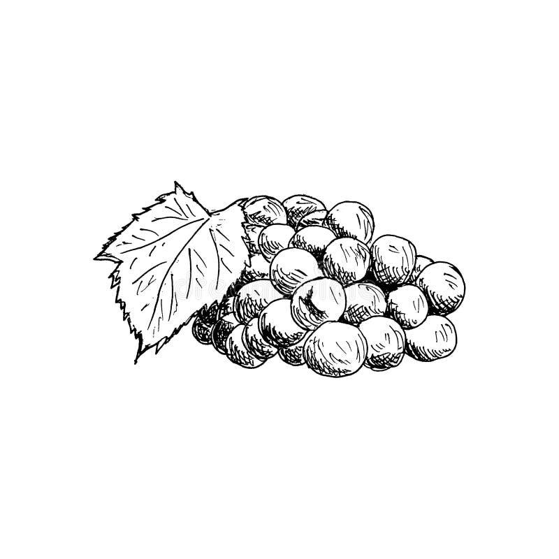 Racimo de la uva con el ejemplo dibujado mano del vector del bosquejo del vintage de la hoja de la uva libre illustration