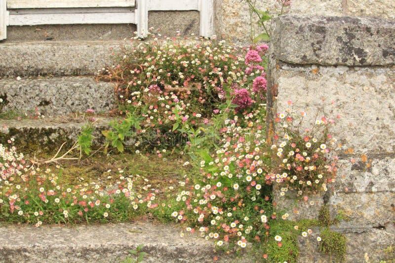 Racimo de margaritas del rosa y blancas en los pasos de piedra imagen de archivo