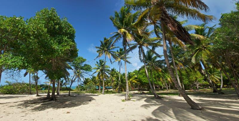 Racimo de palmas cerca de la playa imagen de archivo libre de regalías