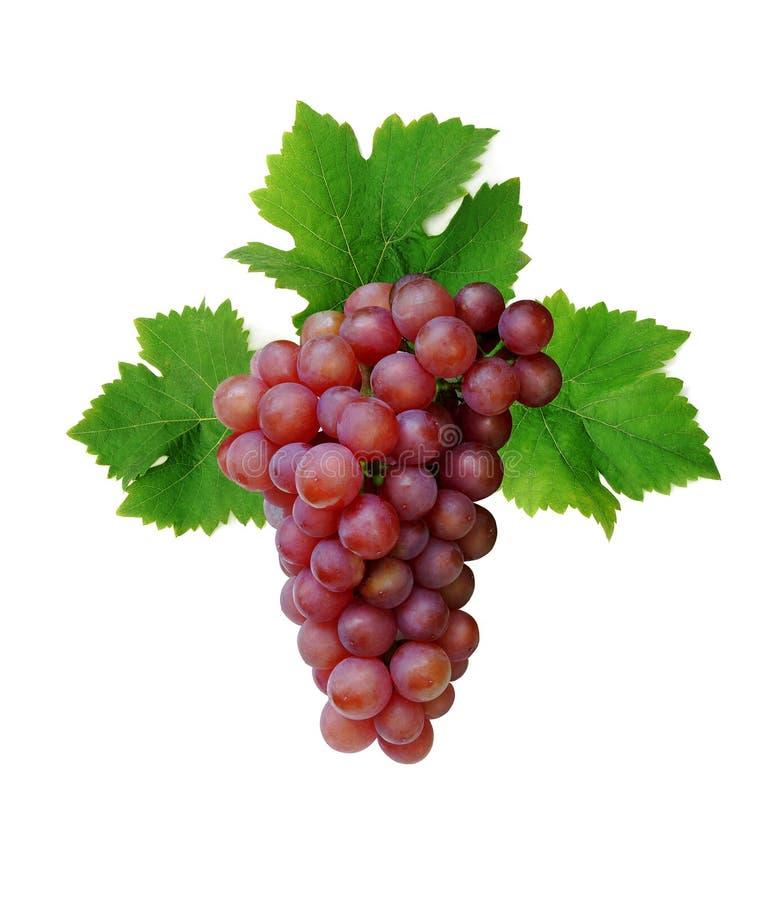Racimo rosado de la uva